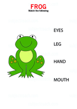 Identify body parts of a frog - Free Printable Worksheet