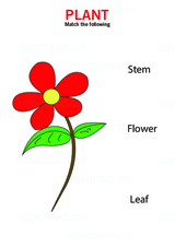Identify different parts of a flower