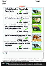 Facts About Cattle/1