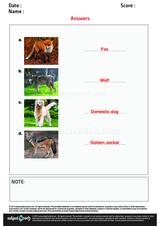 Family Dog Names/1