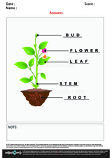 Label The Plant Part/1