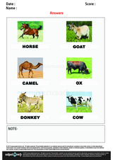 Names of Cattle/1