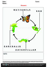 Stages of a Butterfly/1