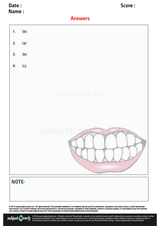 teeth/1